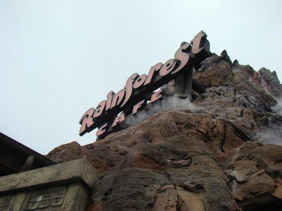 Disney Springs: RAINFOREST CAFE