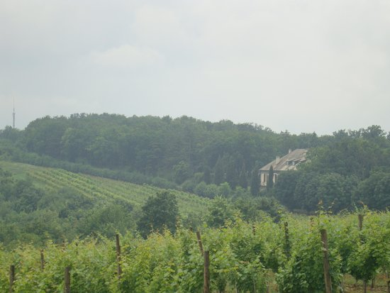 Oplenac: the royal vineyard