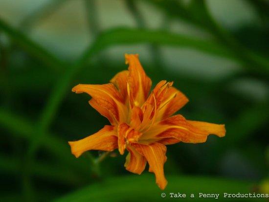The Mark Addy: Flowers in garden