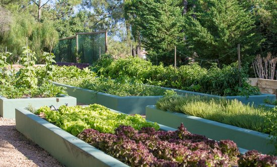 Parrilla Natural : Vegetable and Herb Garden