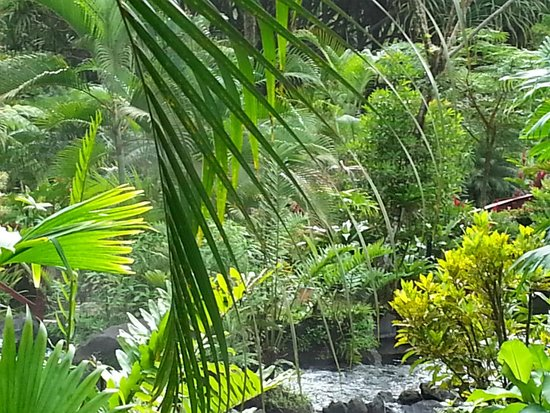 Tabacon Grand Spa Thermal Resort: Flora is bountiful and beautiful.