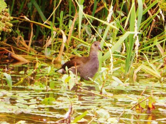 Tiverton Canal Co: Bird
