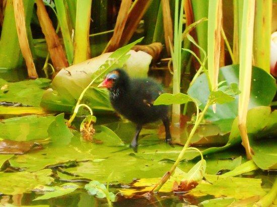 Tiverton Canal Co: Baby bird