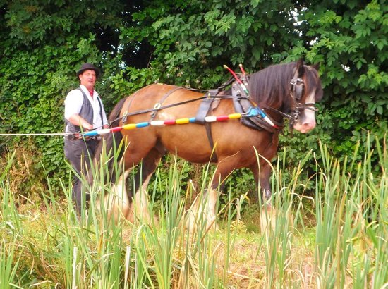Tiverton Canal Co : Shire horse