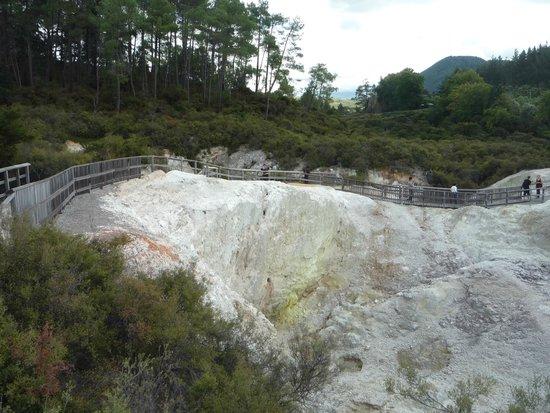 Wai-O-Tapu Thermal Wonderland : au fond forêt indigène