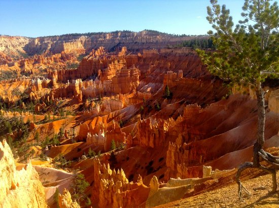 Bryce Canyon Lodge: Anita took this shot of the hoodoos within walking distance of our room.