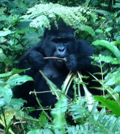 Bwindi Impenetrable National Park: iPhone photo does no justice. AMAZING