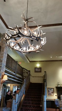 AmericInn Lodge & Suites Laramie - University of Wyoming: Antler light fixture in the check in area.