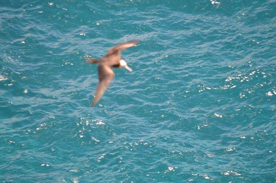 Kilauea Point National Wildlife Refuge: cruising the waves
