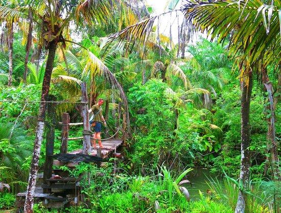 Catfish Farm: Beautiful Landscaped Gardens