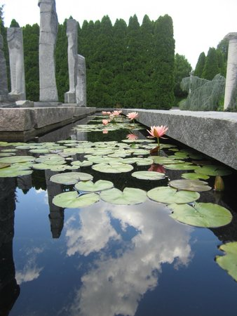 Grounds For Sculpture: Water lillies