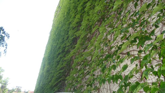 Pension VITIS: The terrace wall