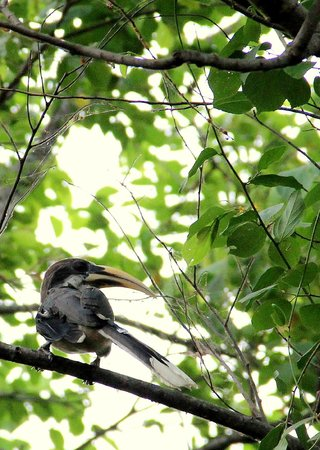 Heritance Kandalama : Birds everywhere