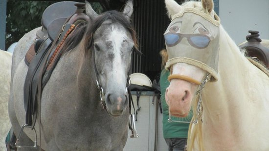 Kentucky Horse Park: Trail Rides
