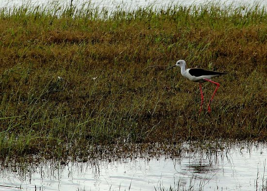Heritance Kandalama : Water bird by lake