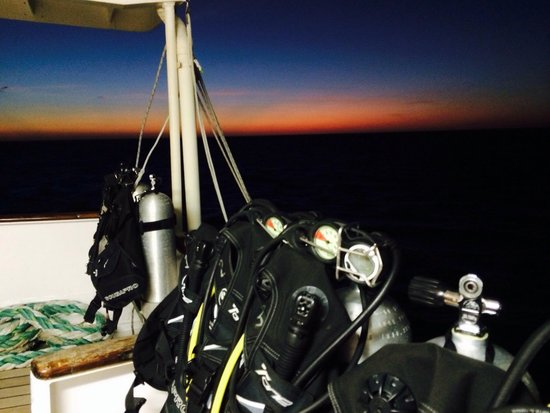 Reef Encounter: Early morning diving. Suit up. Get in