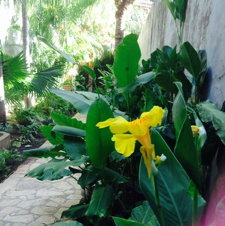 Casa Lucia Boutique Hotel & Yoga Retreat: Gardens of Casa Lucia
