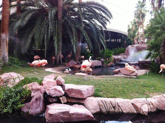 Flamingo Las Vegas Hotel & Casino: I fenicotteri del Flamingo