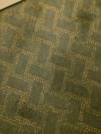 Beach House, A Holiday Inn Resort: Carpet in room