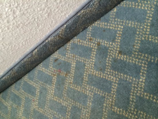 Beach House, A Holiday Inn Resort : Carpets in room