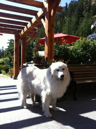 Kraze Legz Vineyard and Winery: Maggie the winery guard, pretty and playful!