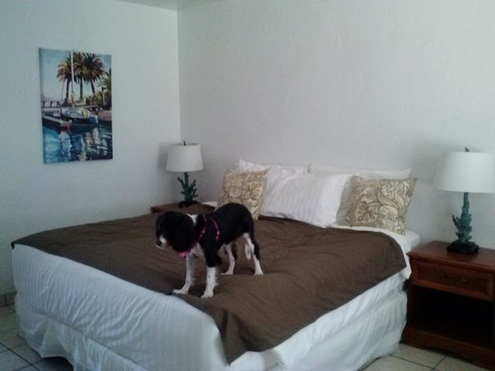 The Patriots Boutique Motel : Pet friendly