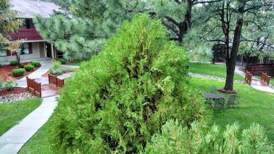 Best Western Pine Springs Inn: Good shot of a bush!