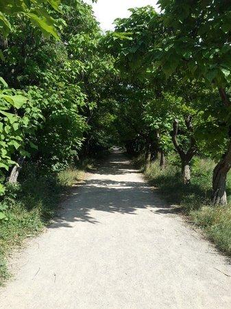 Salgirka City Park: Аллея к сиренгарию Ботанического сада ТНУ им. Вернадского