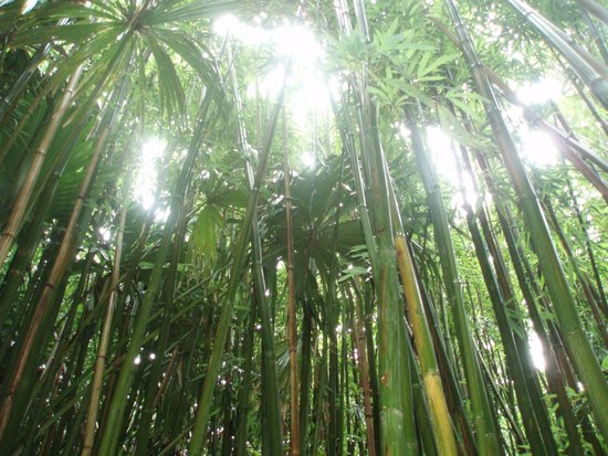 Manoa Falls: Trek to the falls