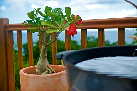 Rochers Caraibes-Eco Village : Gran Kaz