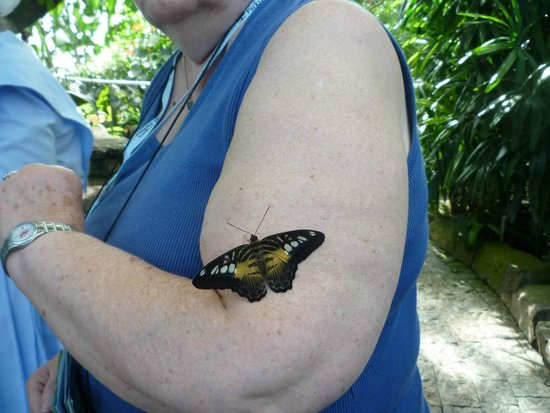 Niagara Parks Butterfly Conservatory: I thought at first a mosquito was on my arm.  Glad I didn't slap at it.