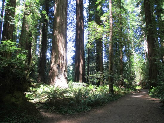 KOA Campground Crescent City: Nearby Jedediah Smith Redwoods Nat'l Park