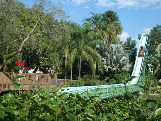 Busch Gardens : Paisagens lindas!!