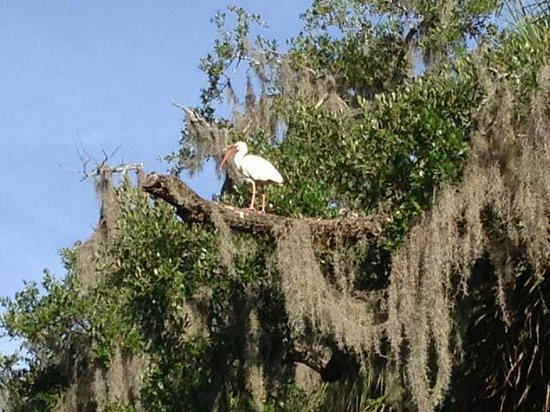 Inn at Middleton Place: Bird and moss