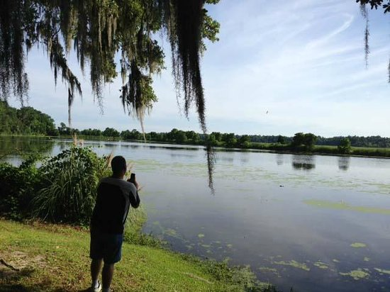 Inn at Middleton Place: rice lakes