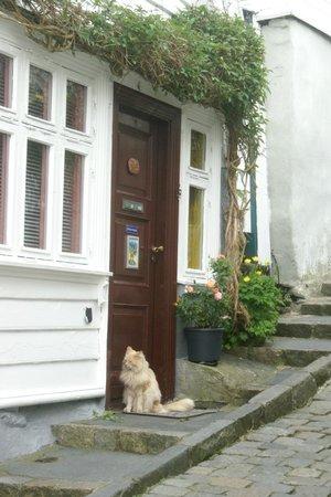 Old Stavanger: Cat at the door