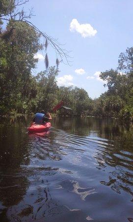 Adventures in Florida: Wekiva River