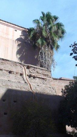 Mezquita y Minarete Kutubía: Muro com palmeiras
