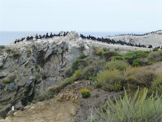 Point Lobos : Bird Island