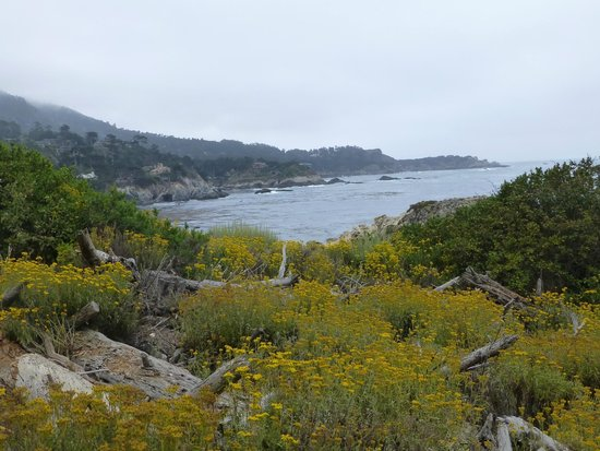 Point Lobos State Reserve: Gibson beach