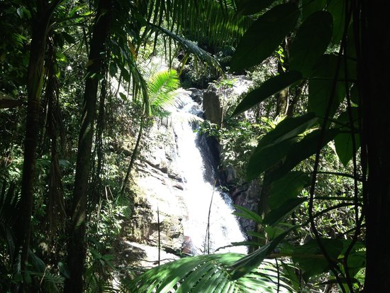 The El Yunque Rain Forest : Waterfall