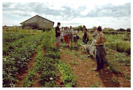 Carso Triestino: Un campo del Carso in una gita organizzata da Joseph