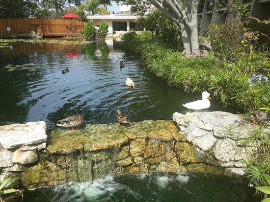 Ramada Santa Barbara: La laguna