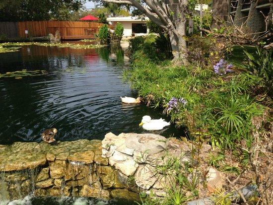 Ramada Santa Barbara: Laguna
