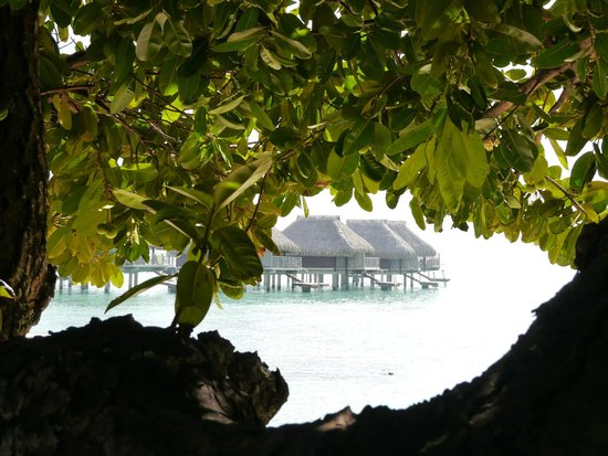 Hilton Moorea Lagoon Resort & Spa: Beautiful grounds