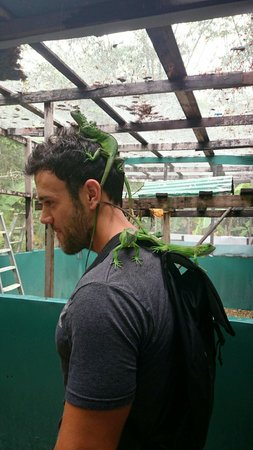 Green Iguana Conservation Project : Feels weird
