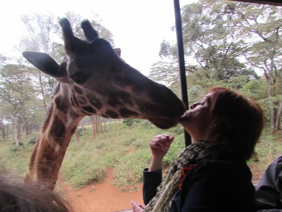 Giraffe Centre: Kiss Kiss!