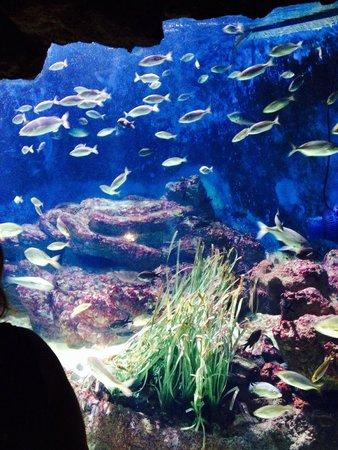 Aquarium Mare Nostrum : 7-14