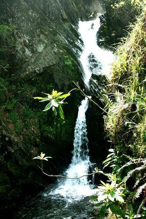 Devil's Bridge Falls: Cascate