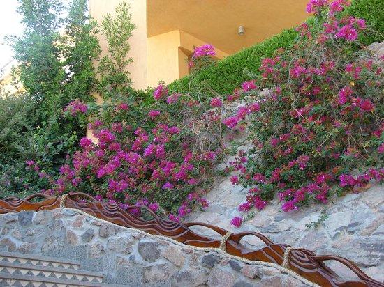 Rehana Royal Beach Resort & Spa: otoczenie hotelu